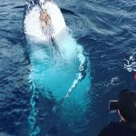 Kalbarri Whale watching tours